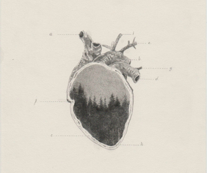 art, heart, and forest image