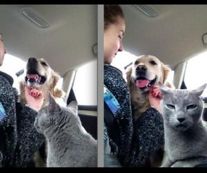 animals, cat, and dog image
