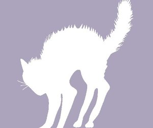 scared cat, cat profile pic, and facebook silhouette image