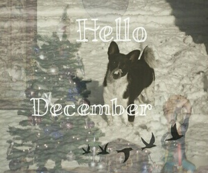 december, goodbye, and hello month image