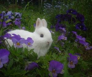 rabbit, animal, and flowers image