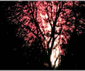 fireworks, pink, and trees image