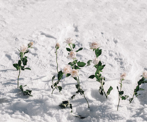 snow, rose, and flowers image