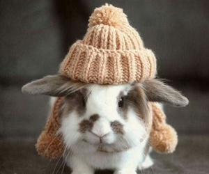 bunny, cold, and rabbit image