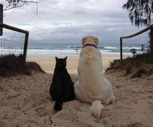 cats, dogs, and baby animals image