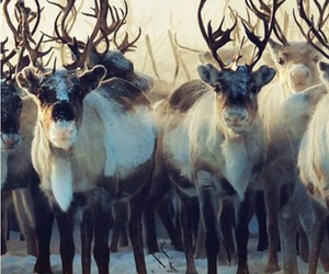 reindeer, winter, and snow image