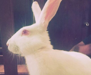 bunny and pets image