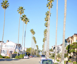 photography, summer, and palm trees image