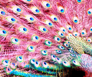 blue, colorful, and feathers image