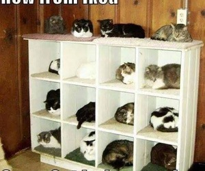 cat, funny, and ikea image