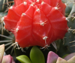 cactus, flower, and red image