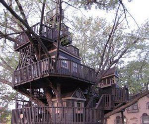 tree house, tree, and house image