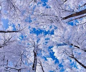 winter, tree, and snow image
