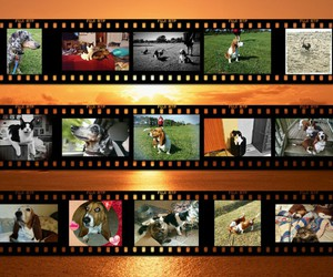 pets, rescued, and basset hounds image