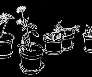 plants, grunge, and drawing image