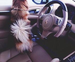 dog, car, and luxury image