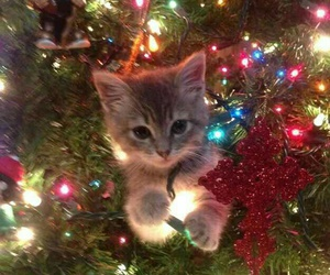 adorable, cat, and christmas tree image