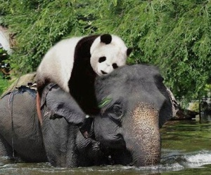 panda, elephant, and friends image