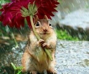 flowers, rain, and animal image