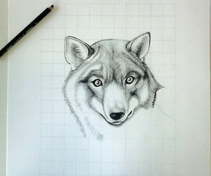 draw, wolf, and black e white image