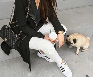 fashion, dog, and adidas image