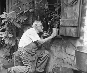 elderly, gardener, and planys image