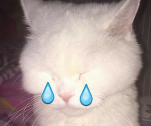 cat, grunge, and cry image