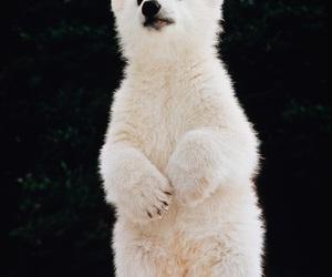 animal, bear, and cute image