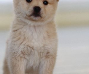 animal, animals, and cute dogs image