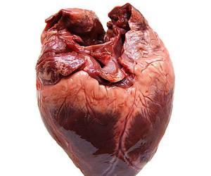 heart, love, and organ image