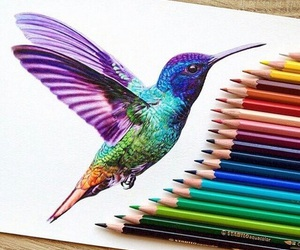 drawing, art, and bird image
