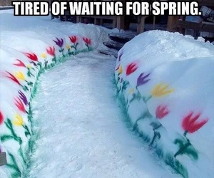 funny, flowers, and spring image