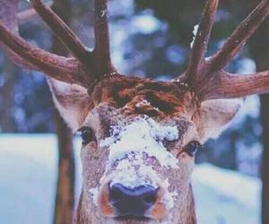 snow, winter, and animal image