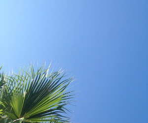palm tree, travel, and tropical image