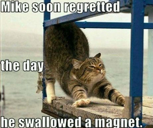 funny, magnet, and cat image