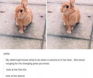 bunny and pose image