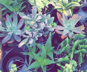cacti, plants, and succulents image