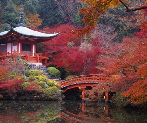 japan, autumn, and travel image