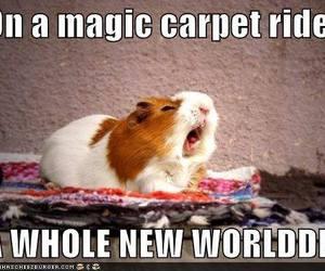 funny, animal, and aladdin image