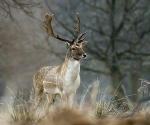 animal, beautiful, and deer image