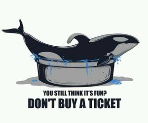 quote, seaworld, and blackfish image