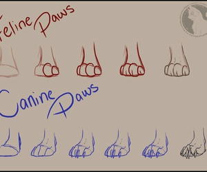 canine, feline, and how to draw image