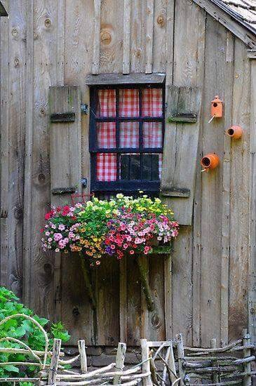 flowers and rustic image