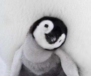 adorable, cozy, and penguin image
