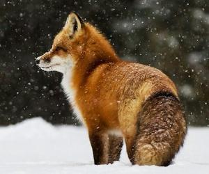 animals, snow, and travel image