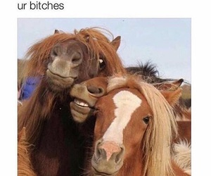 horse, selfie, and drunk image