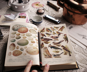book and birds image