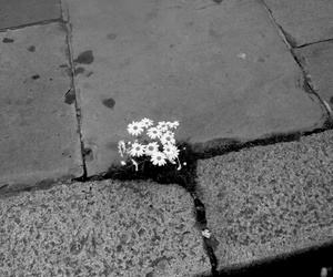 flowers, black and white, and street image