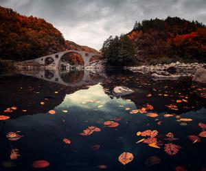 bridge, nature, and autumn image