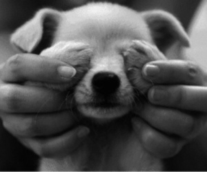 black and white, puppy, and yes image